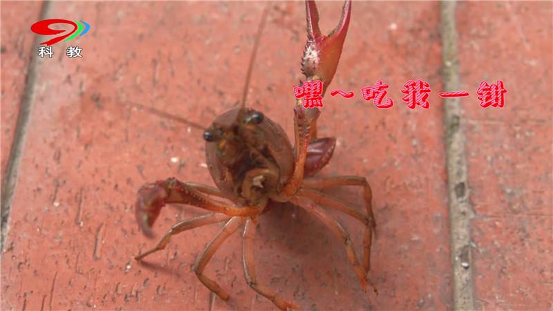 潜江一品大虾包装带台标_20180329094902.JPG